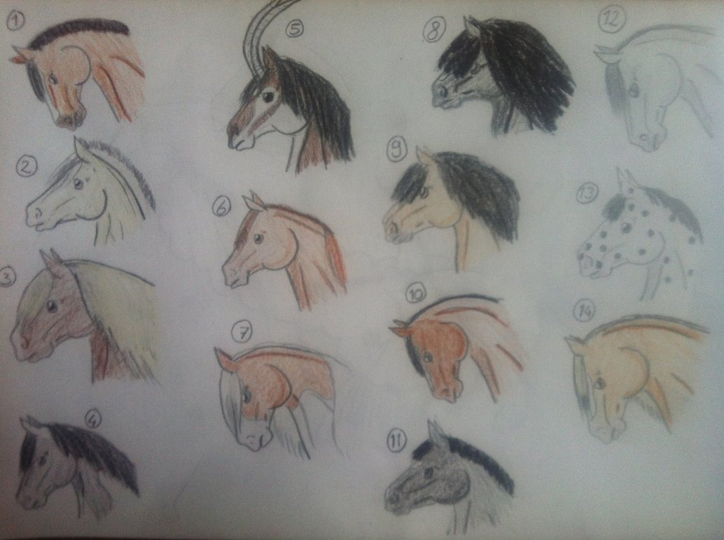1034x772 Horse Head Adopts, Draw Or Points 3 Left By Nikkiiq