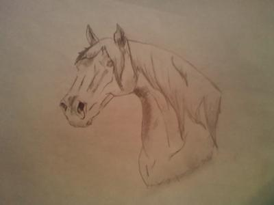 400x300 Horse Head Drawing