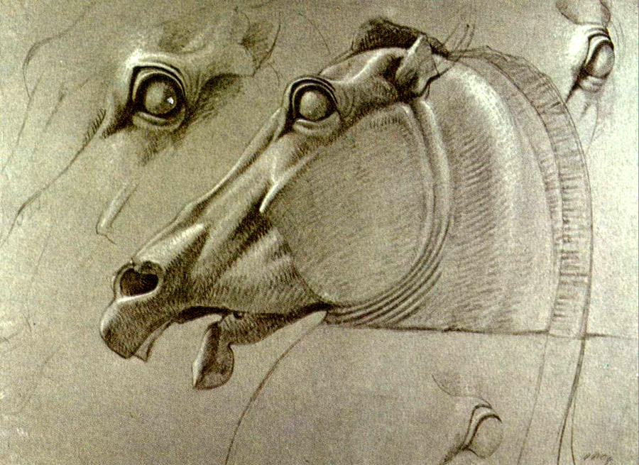 900x655 Horse Head Sketch Drawing By