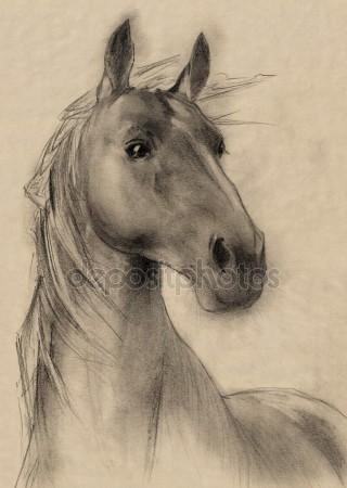 320x450 Horse Head Drawing Stock Photos, Royalty Free Horse Head Drawing