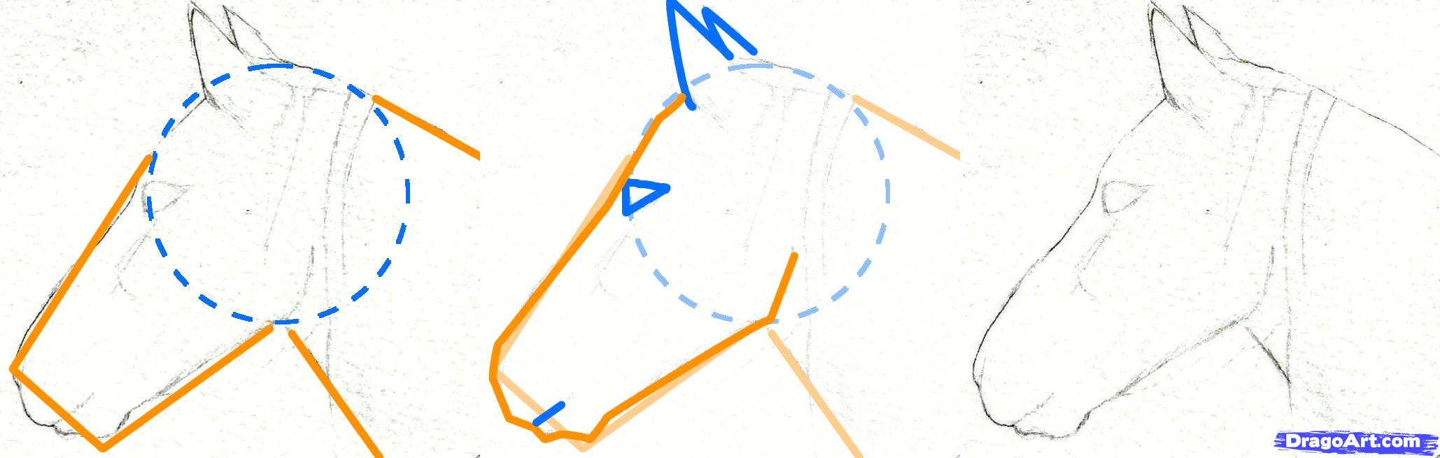 2058x655 Step By Step Horse Head Drawing