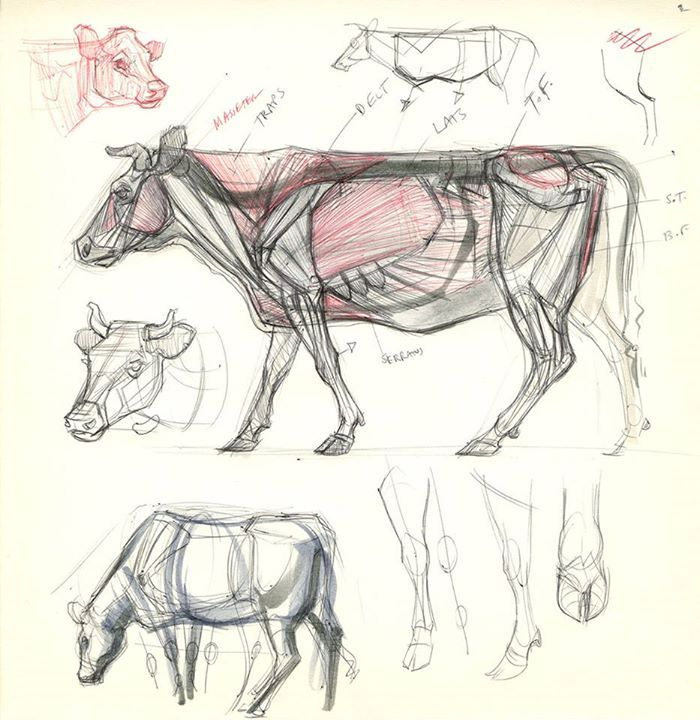 Horse Head Drawing Tutorial at GetDrawings.com | Free for personal ...
