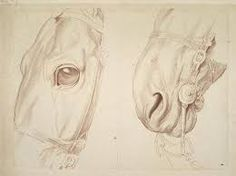 236x176 Image Result For Draw Realistic Horse Muzzle Horse Features