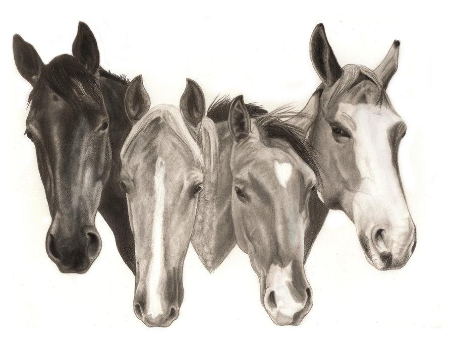 900x680 4 Horse Head Logo By Flyingfancy1