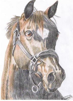 288x400 Gorgeous Horse Head