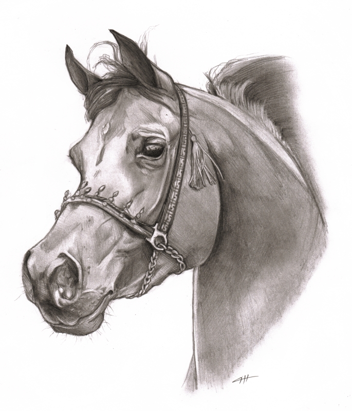 685x800 Horse Head By Cassandracanadyart