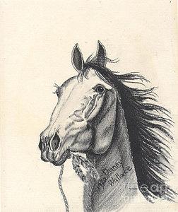 252x300 Horse Hoof Drawings