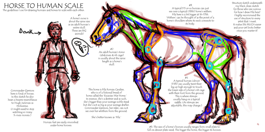 900x450 Horse To Human Scale By Falcolf