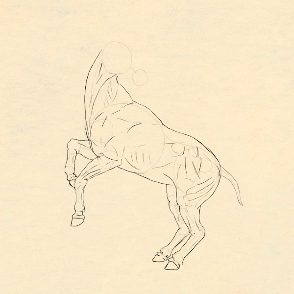 600x600 How To Draw Animals Horses, Their Anatomy And Poses