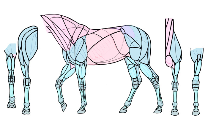 700x415 How To Draw Horses Step By Step Instructions