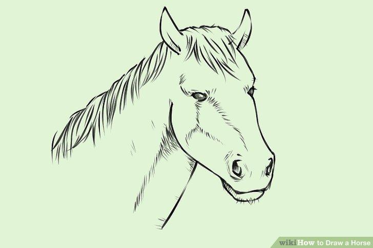 728x485 4 Ways To Draw A Horse