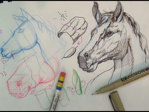 480x360 Pen And Ink Drawing Tutorials How To Draw A Horse Portrait