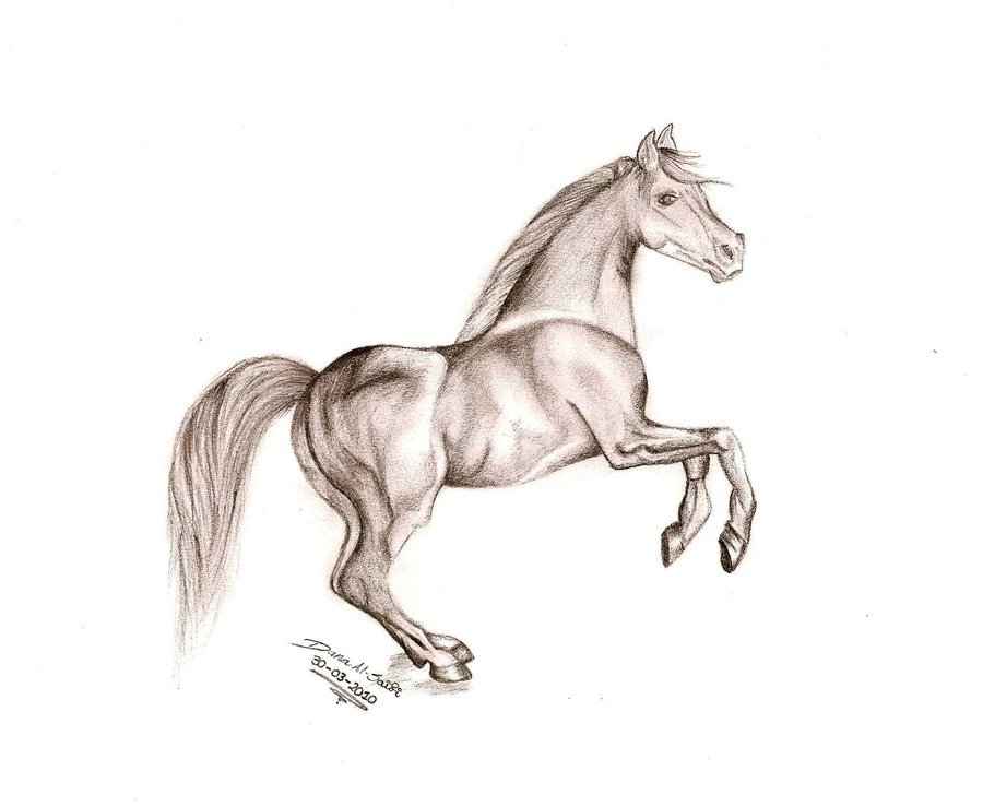 900x738 horse pencil drawing by danasuckerfield on deviantart