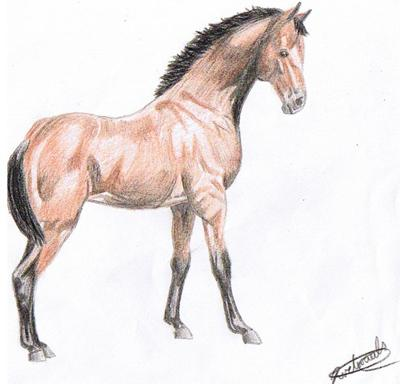 400x384 Horse Drawings By Spirit (Part 1)