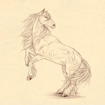 400x400 How To Draw A Horse Step By Step