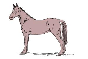 300x200 How To Draw An Easy Horse