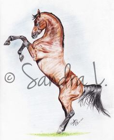 236x288 Images For Gt Wild Horse Drawings In Pencil Art