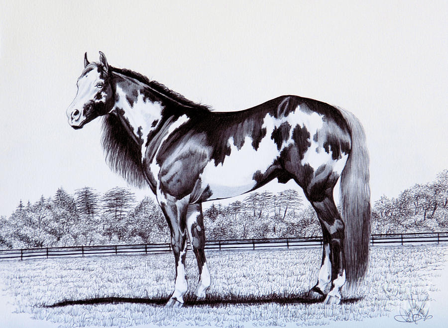 900x659 Photos Horse Drawings Black And White,
