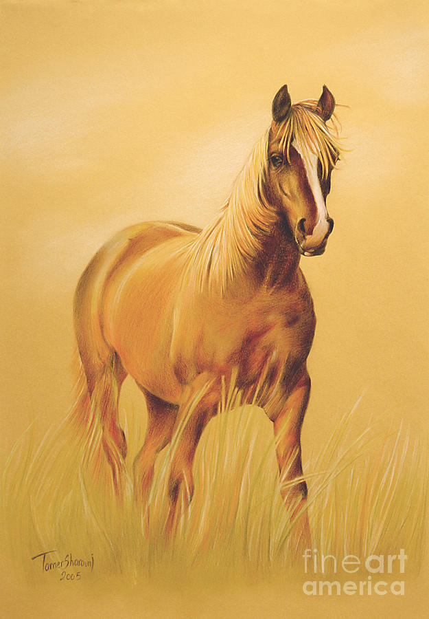 625x900 Horse Portrait Drawing By Tamer And Cindy Elsharouni