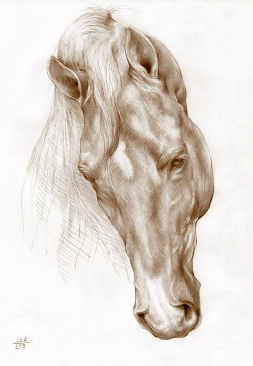 498x720 Unfortunately I Don'T Know Who Created This Wonderful Horse