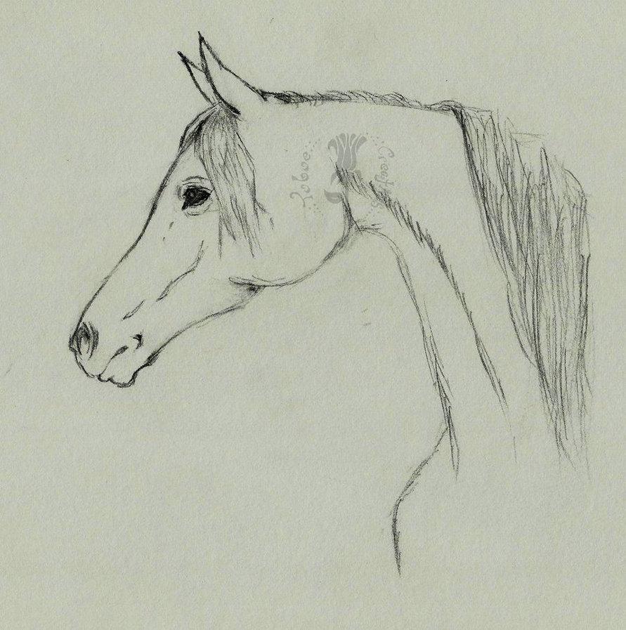 891x897 Arabian Horse Profile By Ryoko Mitsirughi