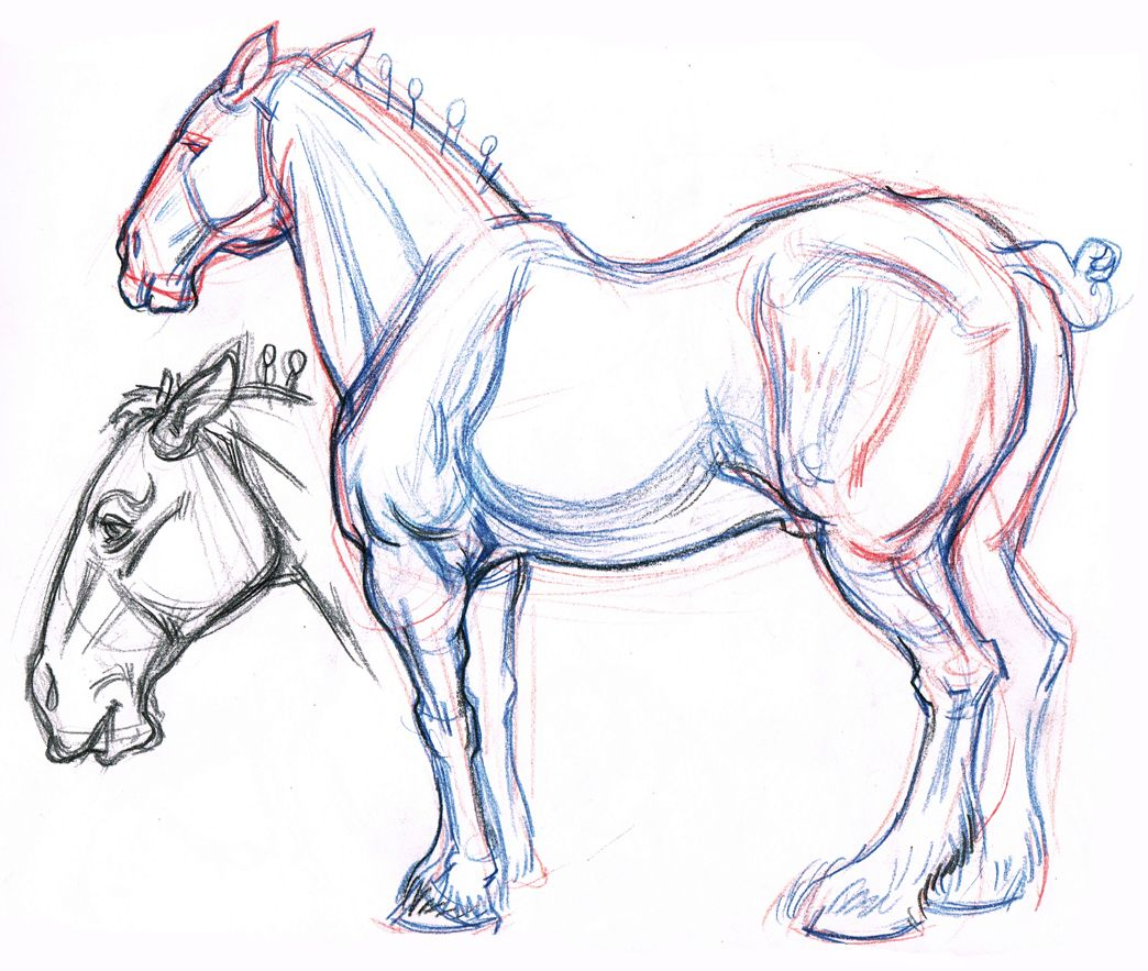 1044x883 Clydesdale Horse Amp Profile Head Drawing