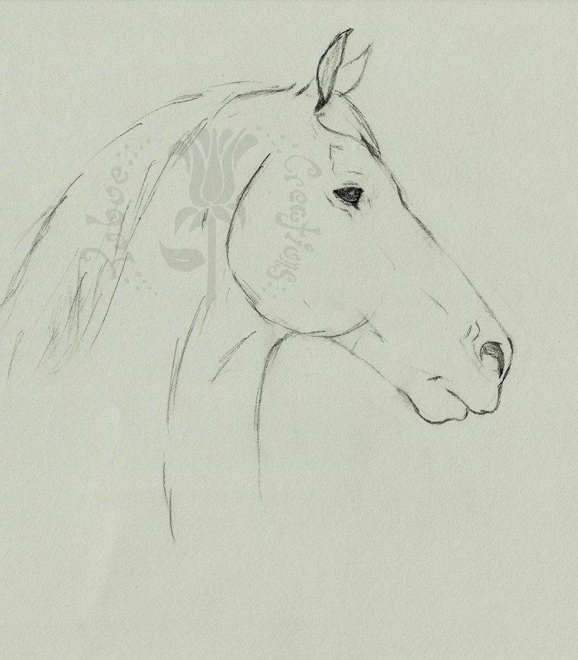 837x955 Draft Horse Profile By Ryoko Mitsirughi