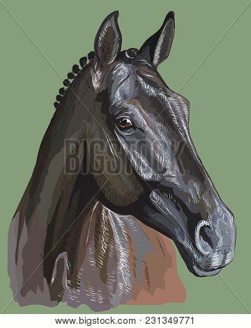 360x470 Horse Head Images, Illustrations, Vectors