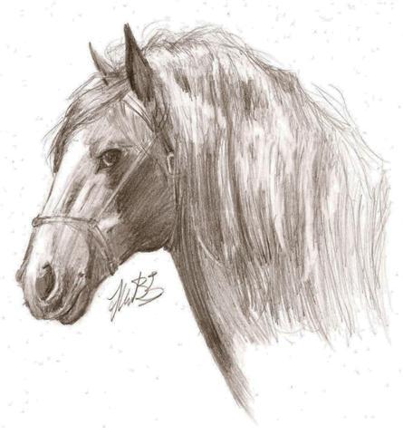 445x480 Horse Profile By Psychointern