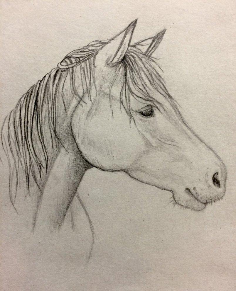 804x993 Horse Profile By Minakowolf37
