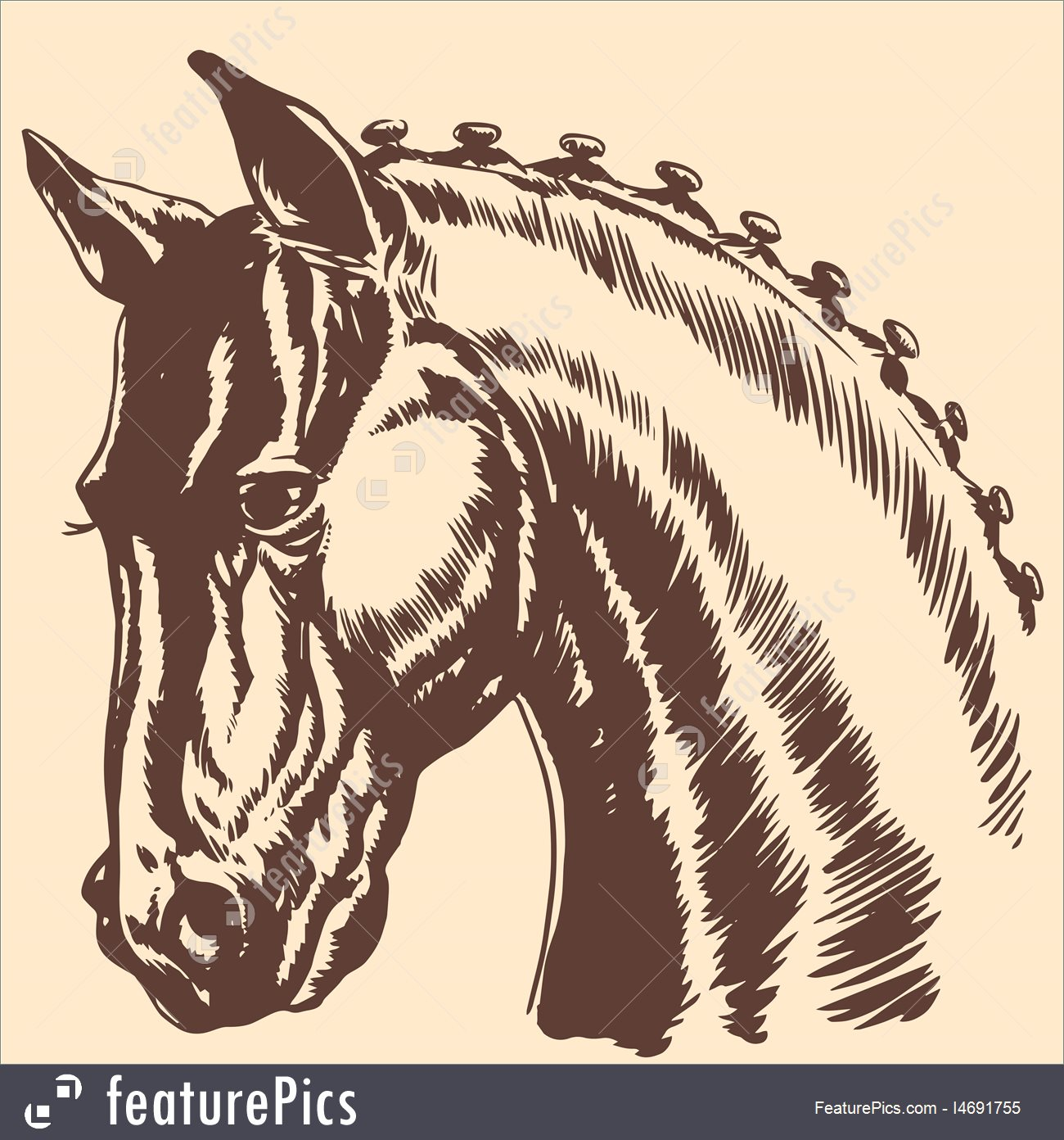 1300x1392 Illustration Of Thoroughbred Horse Head Profile Racing Exhibition Mane