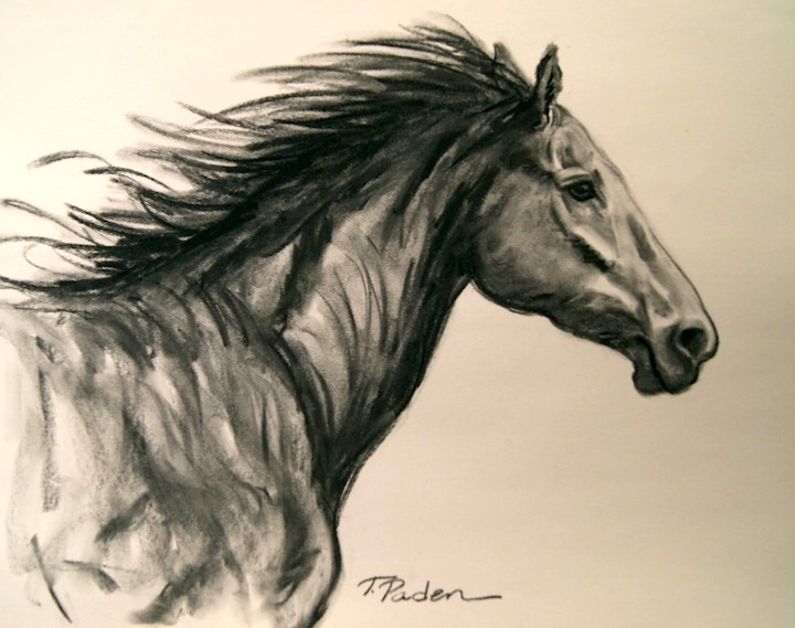720x569 Paintings By Theresa Paden Charcoal Horse Drawing Running Free