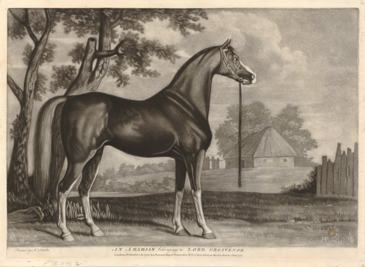 750x548 Portrait Of A Horse In Profile To Right, Standing In A Field