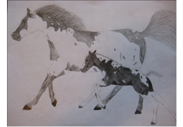 364x253 Tennessee Walking Horse, Horse Drawings