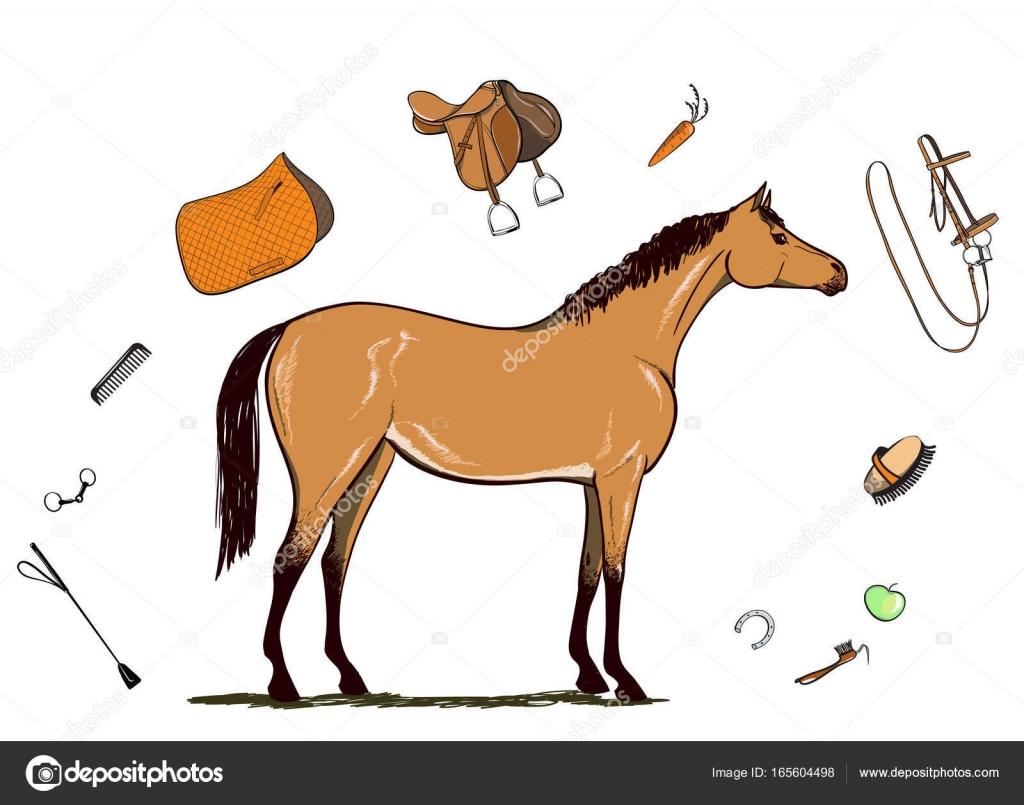 1024x805 Horse And Horseback Riding Tack. Bridle, Saddle, Stirrup, Brush