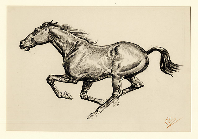 Horse Running Drawing at GetDrawings.com | Free for ... - photo#20