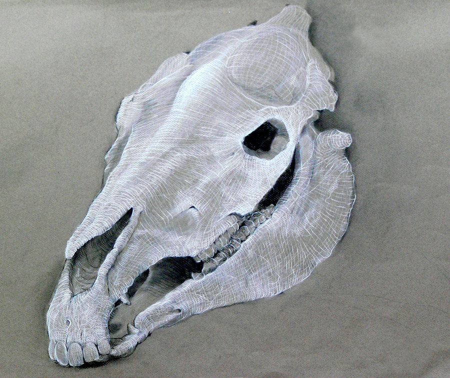900x755 Horse Skull Study By Warly