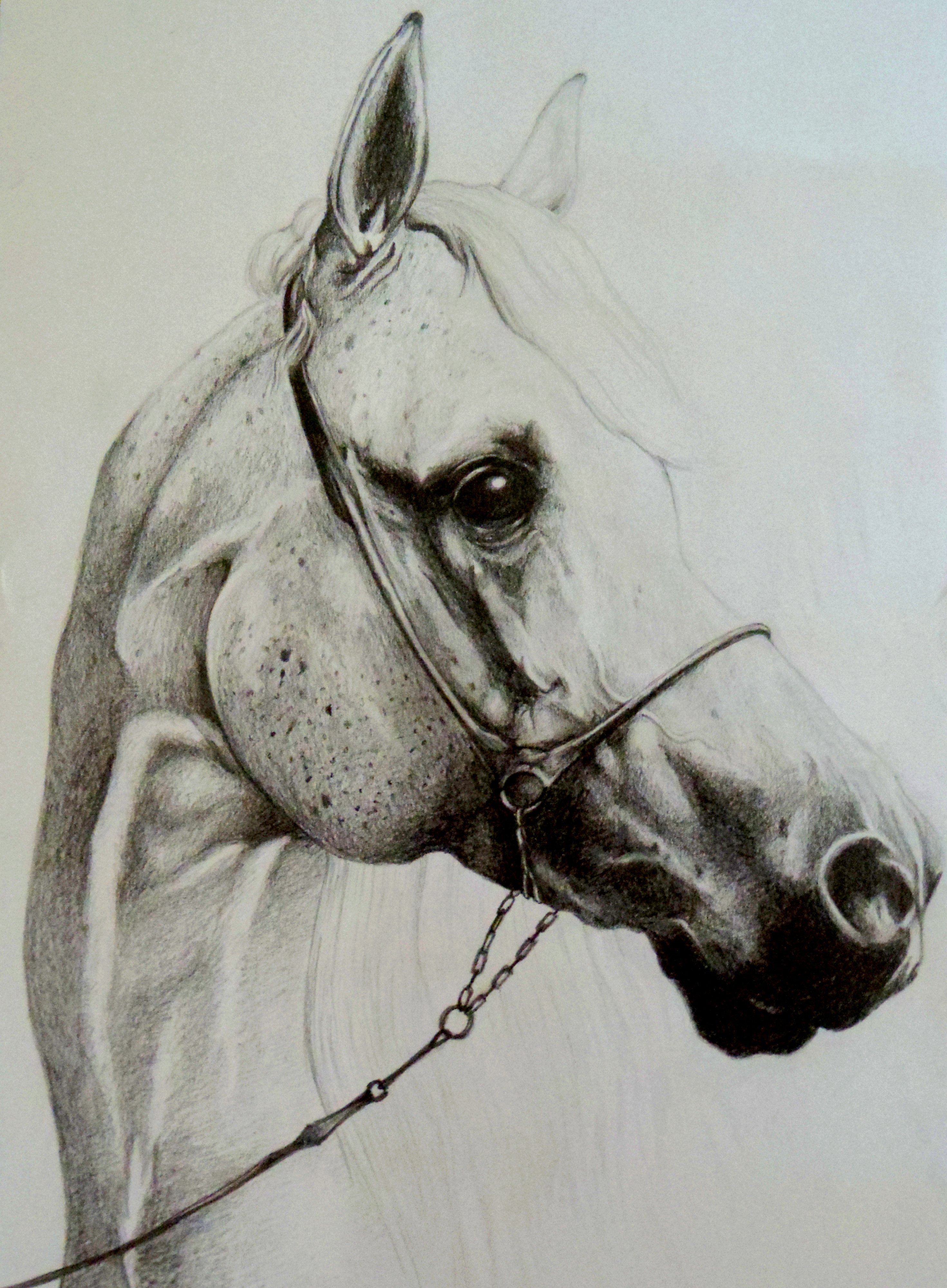 Horses Heads Drawing at GetDrawings.com | Free for personal use ...