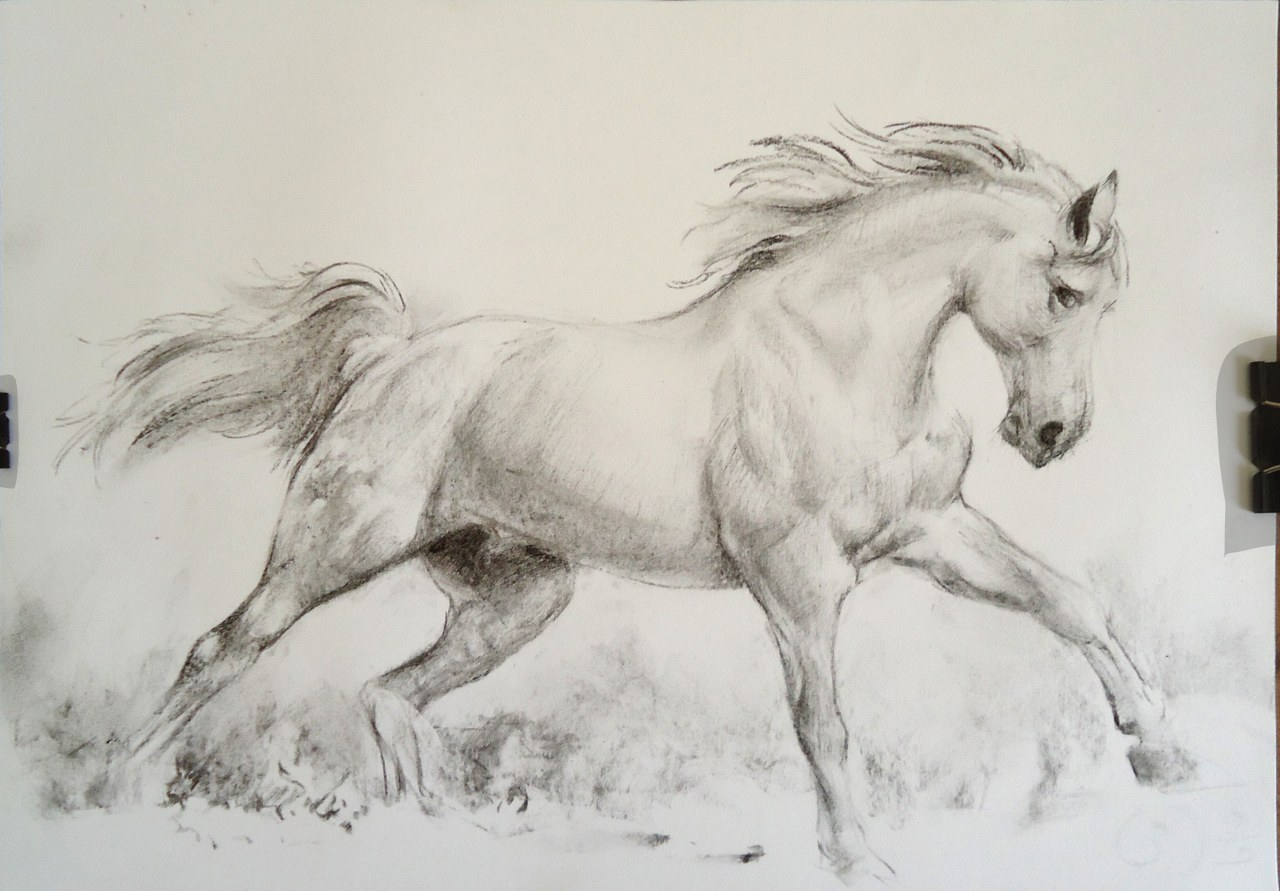 Sketches Of Horses Running