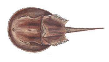 350x201 Peconic Natural History Peconic Estuary