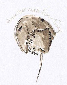 236x300 Horseshoe Crab Drawing
