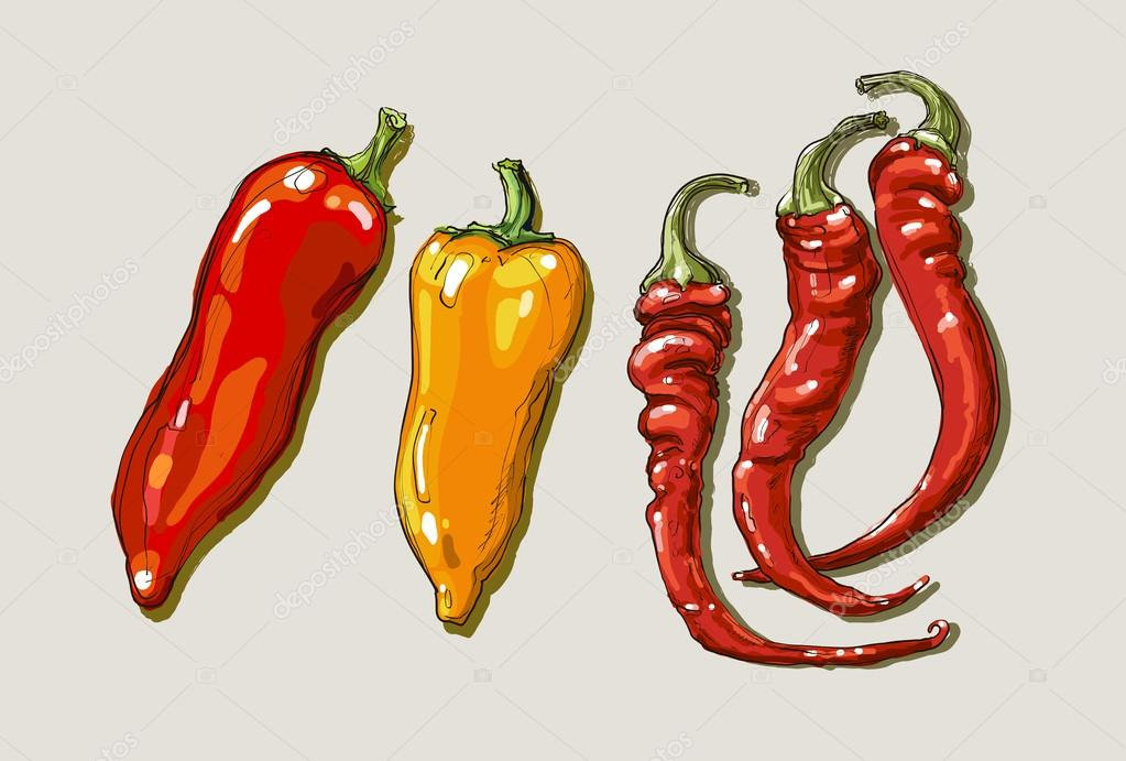 1023x691 Vector Hand Drawing Red Hot Peppers Stock Vector Farbakolerova
