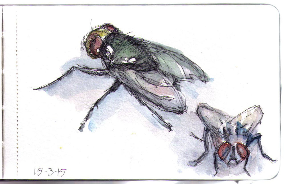 1000x647 393 Drawing Of A Fly With A Ballpoint Pen And Watercolors One