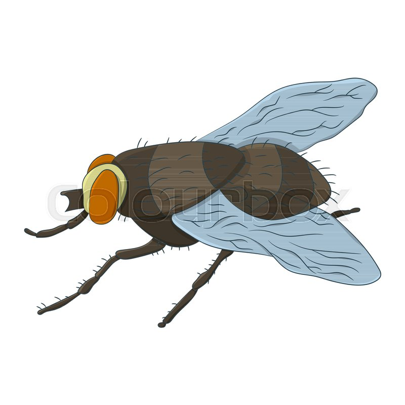 800x800 Colorful Housefly. Musca Domestica. Vector Illustration. Drawing
