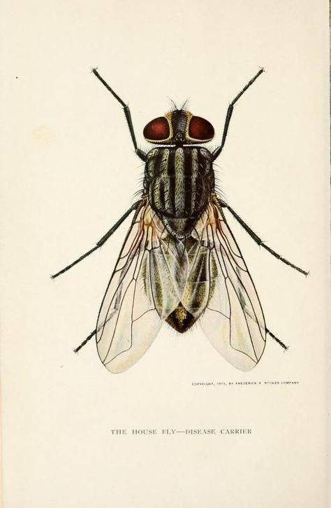 474x726 Frontispiece. The House Fly, Disease Carrier, An Account Of Its