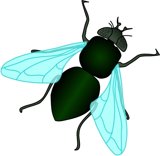 539x528 Green House Fly Free Vector In Open Office Drawing Svg ( Svg