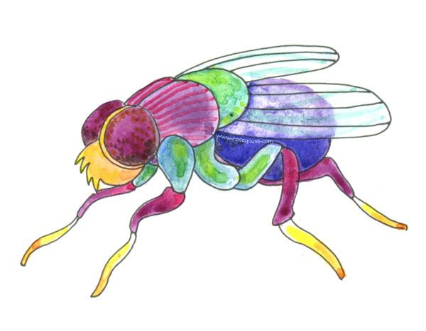 600x467 H Is For House Fly Creative Activities And Creatures