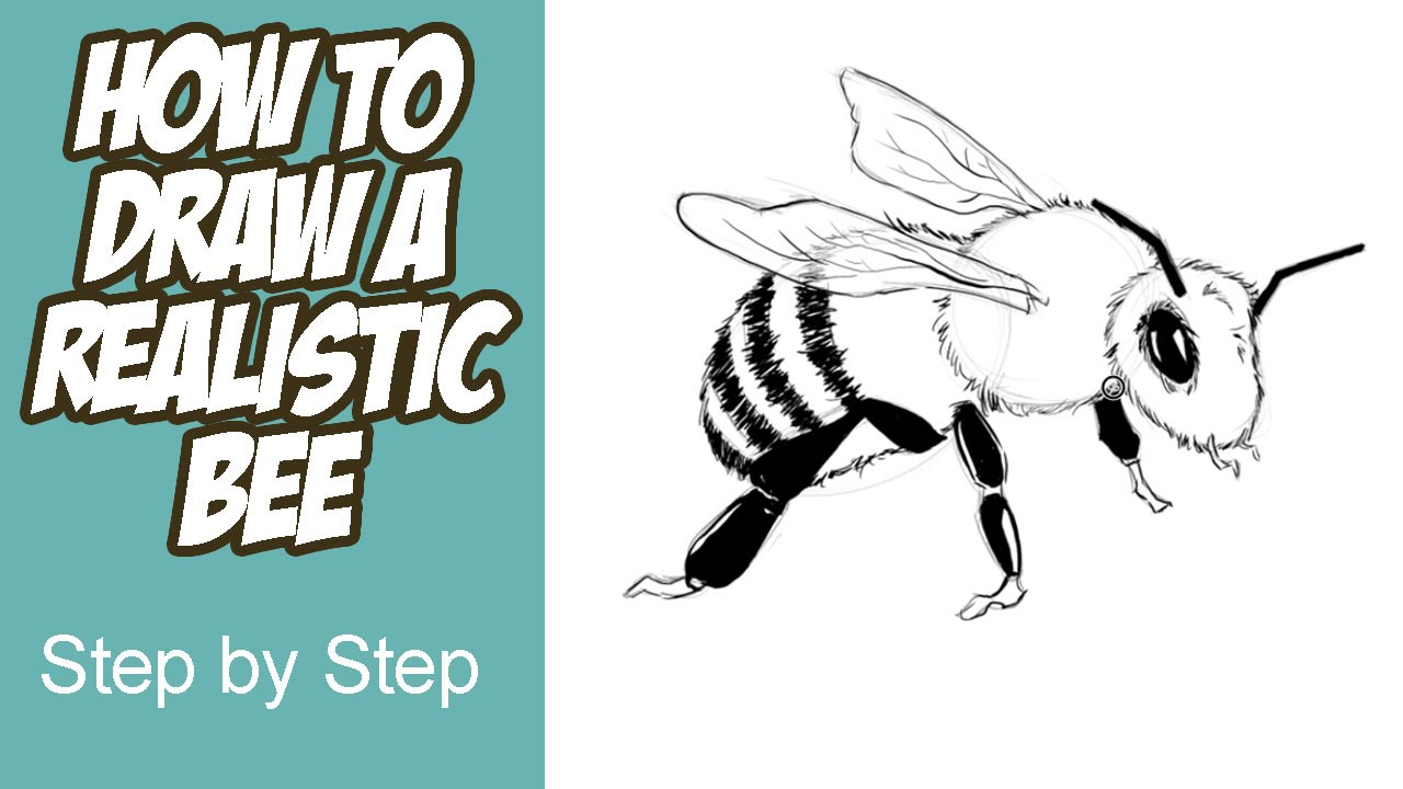 1280x720 How To Draw A Realistic Bee