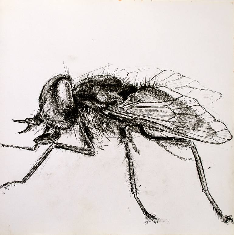 770x771 Saatchi Art Horse Fly Drawing By Richard Lee