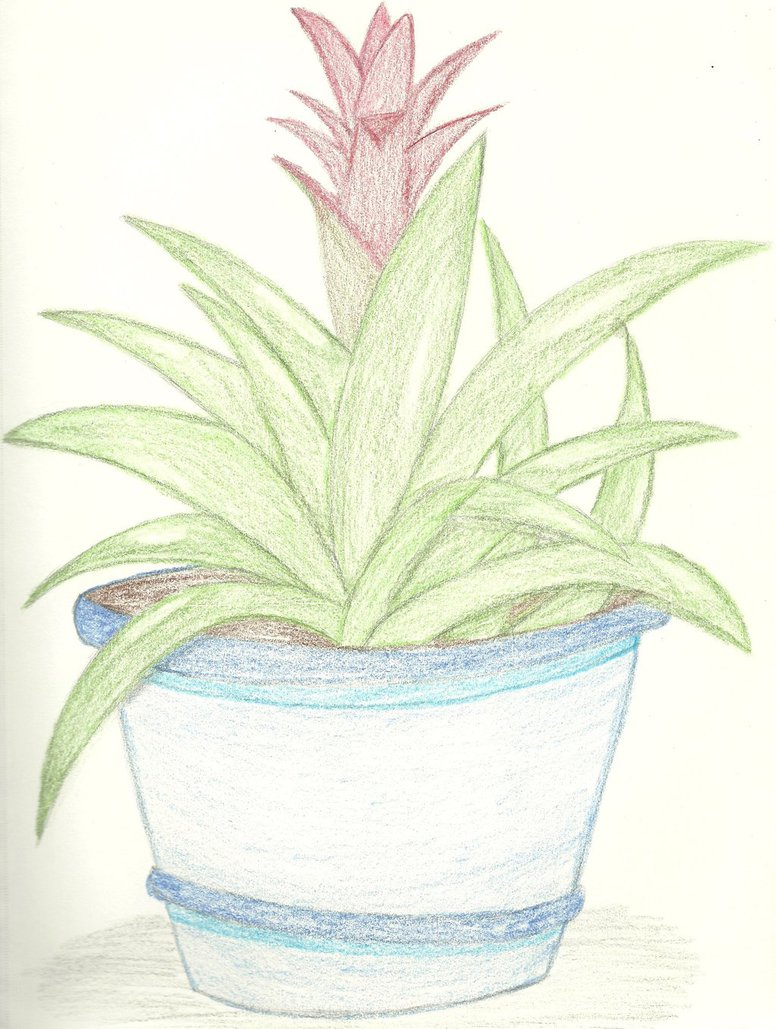 776x1029 Drawing Of A Houseplant. Week Of 10202013 By Ghosthippie